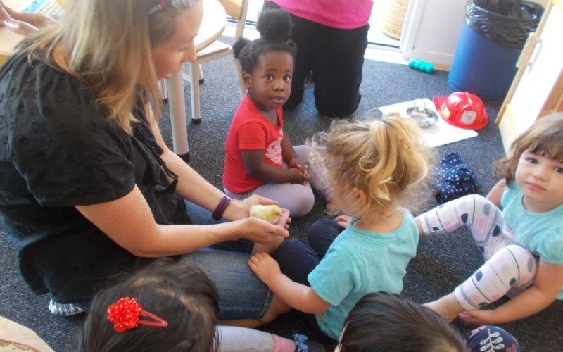 toddlers and infants with chicks 001.jpg